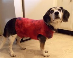 How to make a dog coat, Fiberartsy.com
