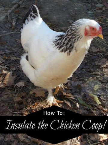 How to insulate a chicken coop, Fiberartsy.com