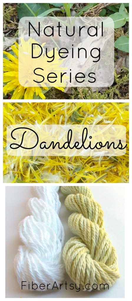 Natural Dye from Plants: Dandelion Flowers, FiberArtsy com